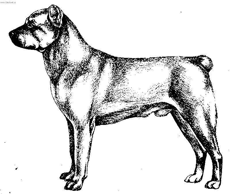 ... Central asia shepherd dog (Dog standard) (Central Asia Shepherd Dog