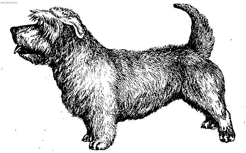 Photos: Irish glen of imaal terrier (Dog standard) (pictures, images)