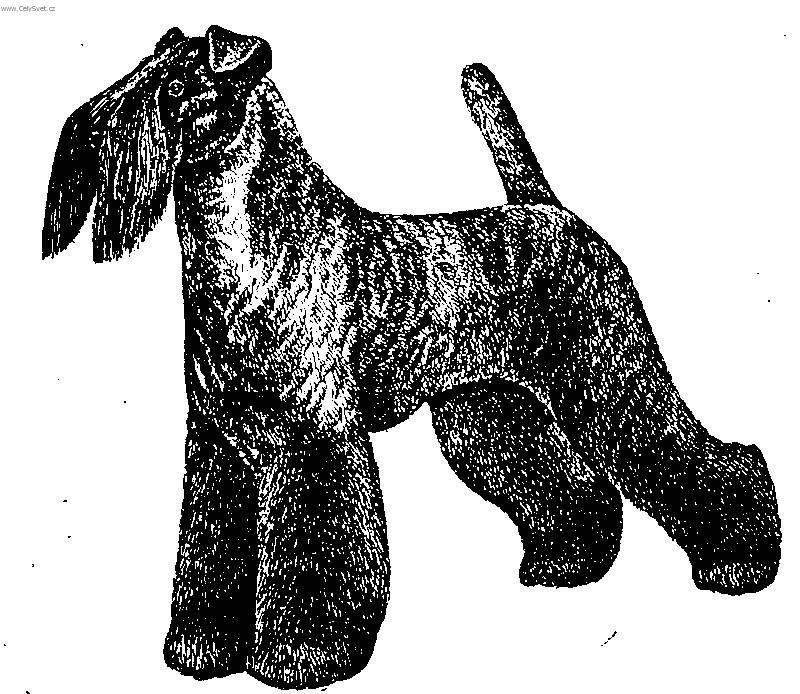 Kerry blue terrier (Dog standard) (Kerry Blue Terrier)