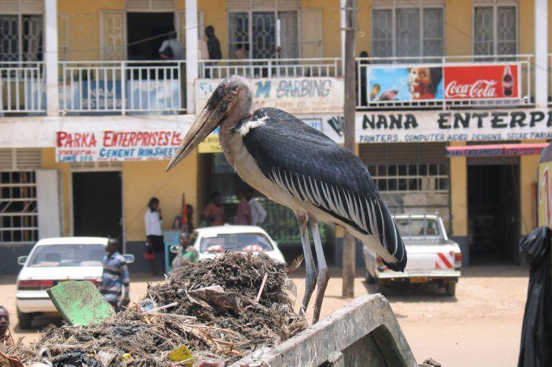 Photos: Tanzania (pictures, images)