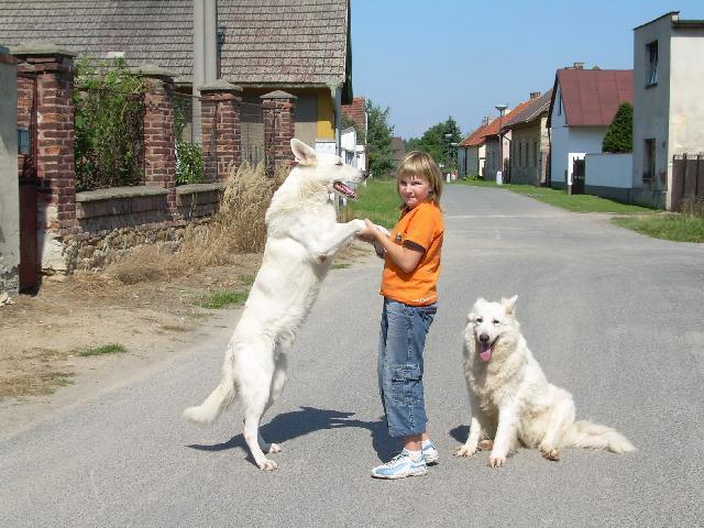 White swiss shepherd dog (Dog standard) (Berger Blanc Suisse, White Swiss Shepherd Dog)