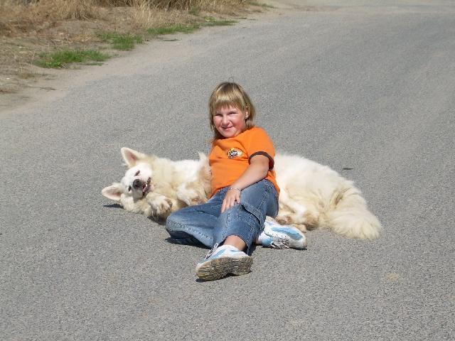 Photo White Swiss Shepherd Dog Dog Standard Berger