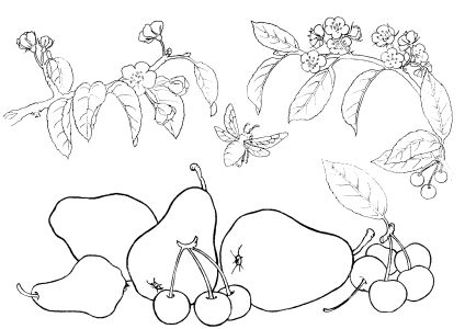 coloring pages for girls. coloring pages for girls to