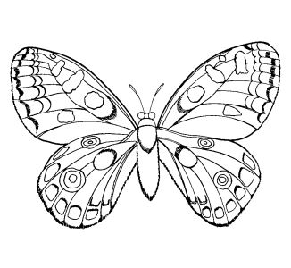 Coloring Sheets Girls On Free Coloring Pages For Boys And Girls Animals  Insects Butterflies