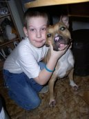 Photos: American staffordshire terrier (Dog standard) (pictures, images)