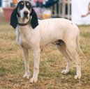 Dog breeds: Scenthounds and related breeds