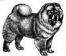 Photo: Chow chow (Dog standard)