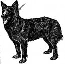 Dog breeds: shepherd