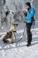 Photos: Greenland dog (Dog standard) (pictures, images)