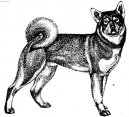 Dog breeds: north